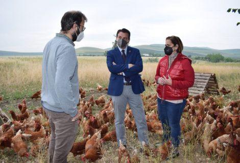 El alcalde y la edil de Reactivación Económica visitan Granja Casanueva, un proyecto de cría de gallinas basado en el bienestar animal